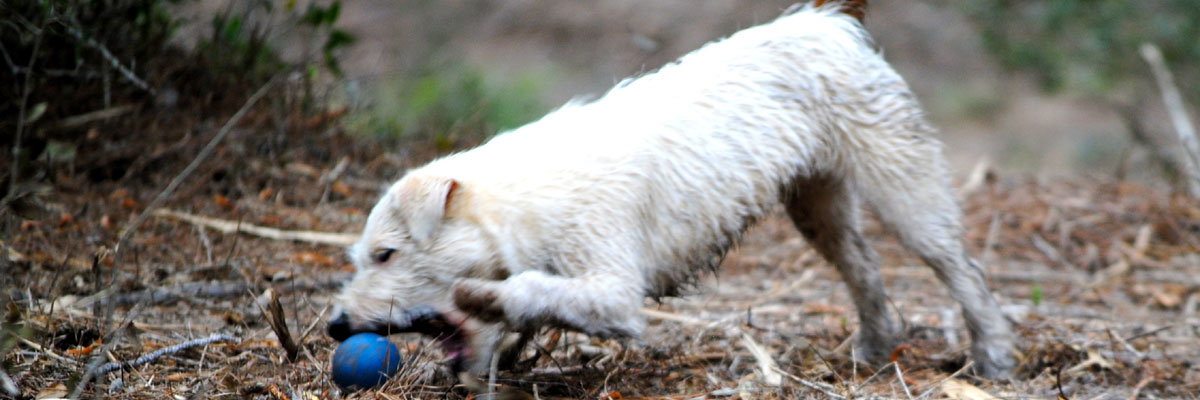 Thistle Ridge Terriers Blog