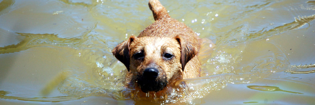 About Thistle Ridge Terriers