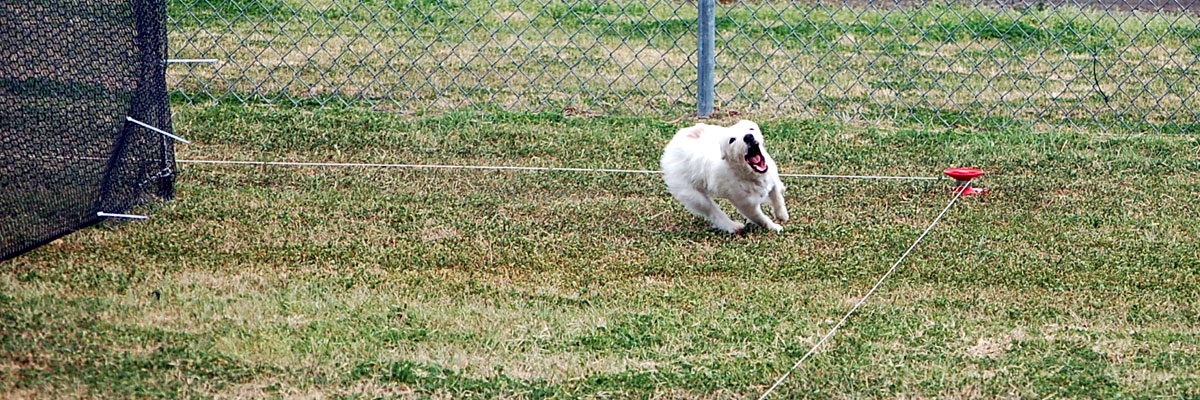 Contact Thistle Ridge Terriers
